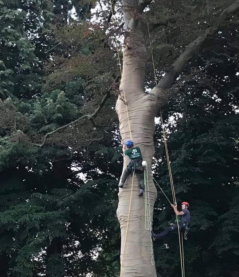 boomverzorging-aalst-tuinmanluypaert